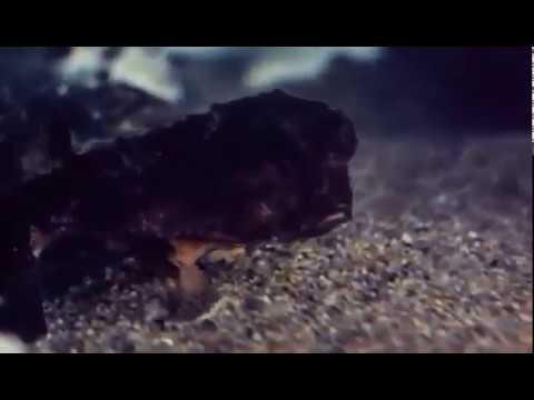 Mermaids Of Tiburon  ..  Erotic Movies Sexy18+ Movie HD HOT ROMANCE